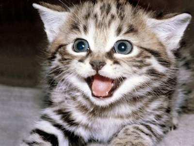 gato-bonito1