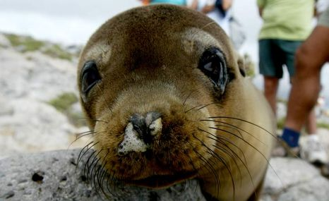 aaaaaagalápagos