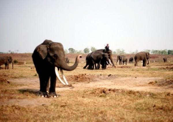 elefantes_zimbahue
