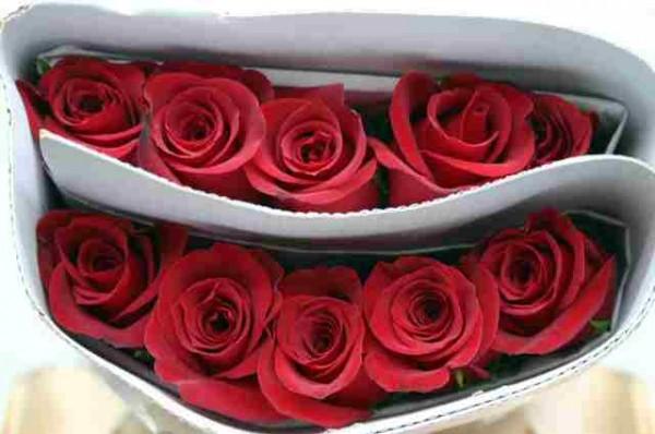 rosas_rojas1