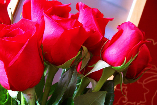 rosas_rojas4