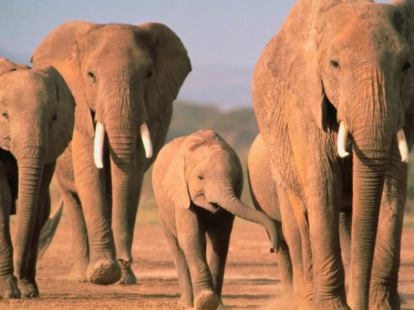 elefantes_kenia