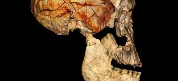 hominido de kenia