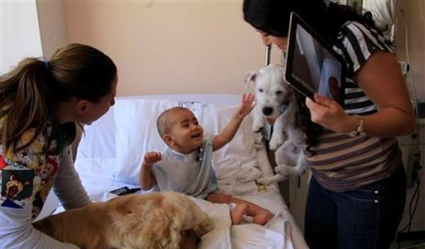Pablo saluda a Juci, una Parson Russell Terrier, en Quito, Ecuador, el 25 de julio de 2012. Todos los miércoles Jucy y Lancelot _el cocker spaniel americano_ visitan a los niños internados por cáncer. Según estadísticas del hospital y testimonios de los padres, al jugar con los perros los niños soportan mejor las quimioterapias. (Foto AP/Dolores Ochoa)