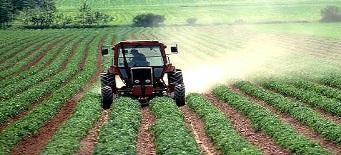Agricultura en Panamá. Foto de Archivo, La República.