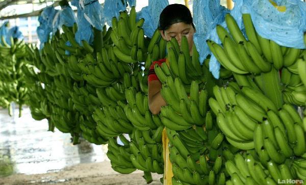 banano exportacion europa