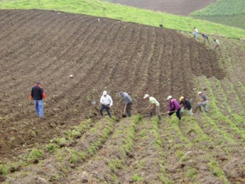 Agricultores ecuatorianos. Foto de Archivo, La República.