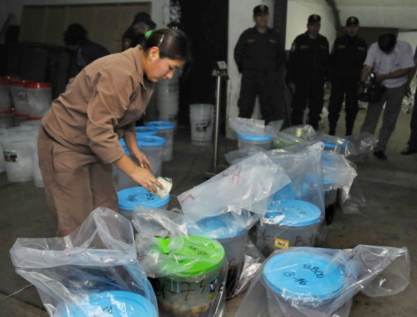 An anti-narcotics police worker seals buckets of artichokes containing liquid cocaine in Lima