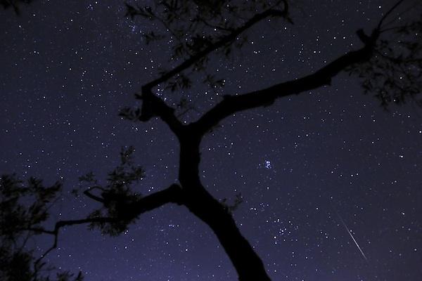 Foto de un meteoro a su entrada en la atmósfera tras un olivo durante la Lluvia de las Perseidas en la aldea de Fanos, en el centro de Grecia. el sábado 10 de agosto de 2013. (Foto AP/Petros Giannakouris)