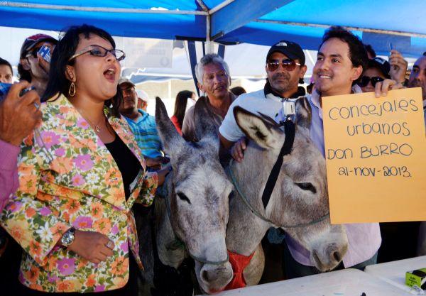 Guayaquil 21 de Noviembre del 2013. Daniel Molina presento la inscripcion de dos burros para las consejalias de la Municipalidad de Guayquil. El popular Don Burro se presento con doña Burra Esperanza en las instalaciones del CNE Guayaquil. Foto: Marcos Pin /API