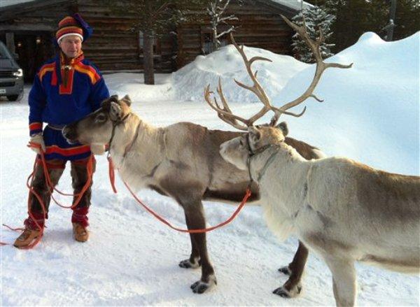 Un adiestrador con dos de sus renos en Saariselka, Finladia, en marzo de 2013. Los renos son de los personajes más importantes de la Navidad, aparecen en postales y película en todo el mundo jalando el trineo de Santa Claus. Pero en el frío norte europeo estos mamíferos son parte de la vida cotidiana. (Foto AP/ David McDougall)