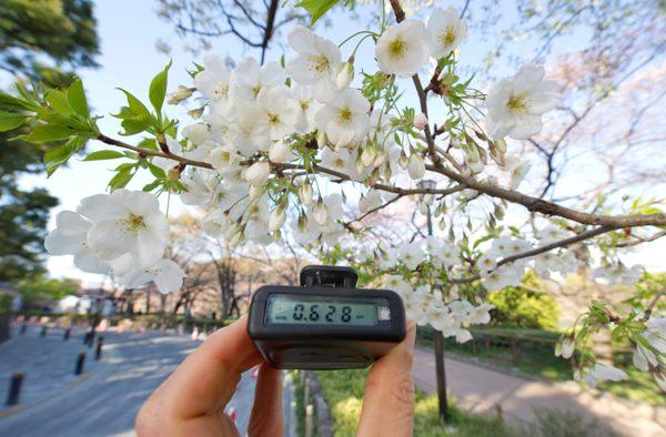 EKB03. TOKIO (JAPÓN), 4/4/2011.- Un aparato de medición marca 0,628 microsieverts a la hora junto a un cerezo en flor en el centro de Tokio (Japón) hoy, lunes, 4 de abril de 2011, tres semanas después del comienzo de las emisiones de radiación provocadas por los daños en la central nuclear de Fukushima tras el terremoto y posterior tsunami del 11 de marzo. La medición media de radiación en las ciudades es de 0,2 microsieverts la hora, una medida que se encuentra a 2 millones por debajo de los niveles de radiación mortal y 40 mil por debajo de la radiación máxima permitida. EFE/Everett Kennedy Brown