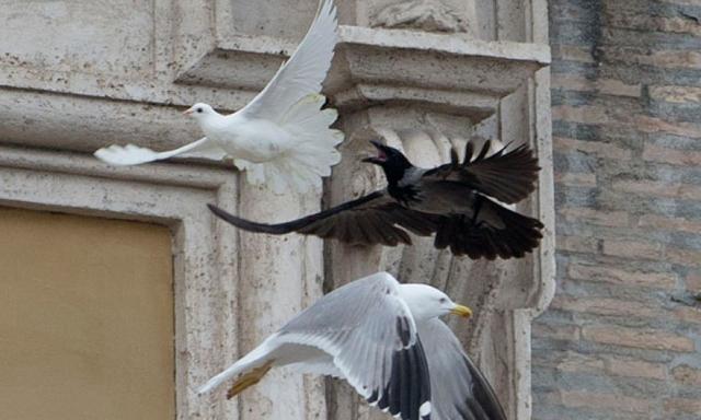 imagen-papa-paloma-atacada-2