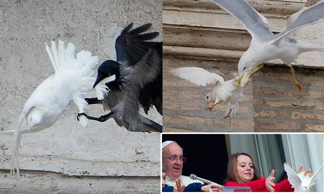 La paloma de la paz siendo atacada por otras aves.
