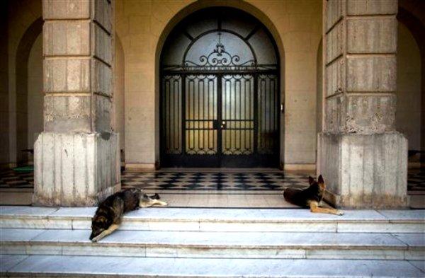 Dos perros reposan frente a la entrada principal del Colegio Máximo de Buenos Aires, donde el hoy papa Francisco dio refugio a varios perseguidos por la dictadura militar de fines de los 70 y principios de los 80 en Argentina, según distintos relatos. Foto del 29 de noviembre del 2013.  (AP Photo/Natacha Pisarenko)