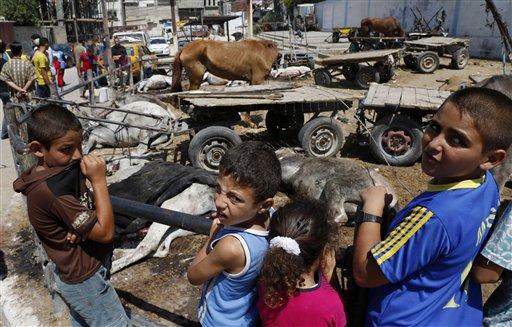 Palestinos contemplan animales muertos o heridos por un ataque israelí a la escuela de la ONU Abu Huussein en la Franja de Gaza. Proyectiles disparados por tanques israelíes cayeron el miércoles 30 de julio de 2014 en una atestada escuela de la ONU que alberga a refugiados de la guerra en Gaza, matando a 15 palestinos e hiriendo a 90 tras destrozar dos aulas, dijeron un funcionario de salud y un portavoz de la agencia de ayuda de la ONU. (AP Foto/Hatem Moussa)