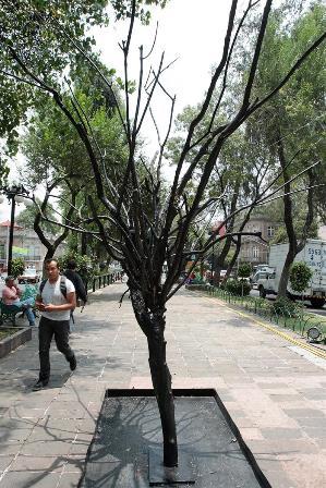 """Fotografía de este 15 de agosto de 2014 que muestra a una persona mientras camina cerca de la obra """"Árbol"""" (2014) del artista Ciler, que hace parte de la muestra contemporánea """"Art Walk"""", exhibida en las calles de la colonia Roma en Ciudad de México (México)."""