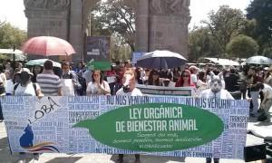 Manifestación por la Ley Orgánica de Bienestar Animal. Foto de Asociación Libera Ecuador.