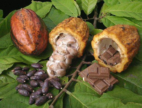 Andes cacao ecuador