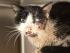 Foto del gato 'zombie', que de despertó luego de 5 días desde su entierro.