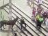 Caballo que apareció en Quito el domingo 1 de febrero. Foto de la página de Facebook de COE Quito.