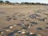 Peces muertos en las playas de Uruguay. Foto de www.alertacatastrofes.com