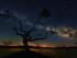 """WASHINGTON (DC, EEUU), 25/05/2015.- Fotografía cedida hoy, lunes 25 de mayo de 2015 por la NASA, elegida como imagen del día por la agencia estadounidense, titulada """"El Árbol de la Galaxia"""", y tomada en Salamanca (España), que captura la silueta de un roble contra un cielo en el que puede apreciarse claramente la Vía Láctea. EFE/César Vega Toledano/NASA/SOLO USO EDITORIAL/NO VENTAS"""