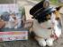 """Muere """"Tama"""", la famosa gata que fue nombrada jefa de estación en Japón. Foto de elmundo.sv"""