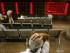 Inversores chinos revisan los datos del mercado en una casa de bolsa en Beijing, el lunes 24 de agosto de 2015. Stocks (Foto AP/Mark Schiefelbein)
