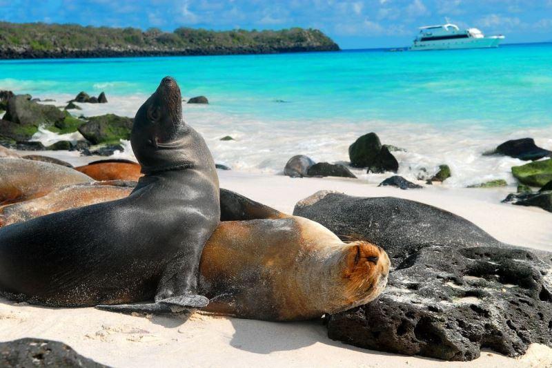 Islas Galápagos, Ecuador. Foto: surtrek.org