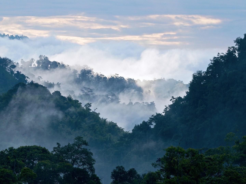 El bosque protector de Mindo, fotografiado por Getty.