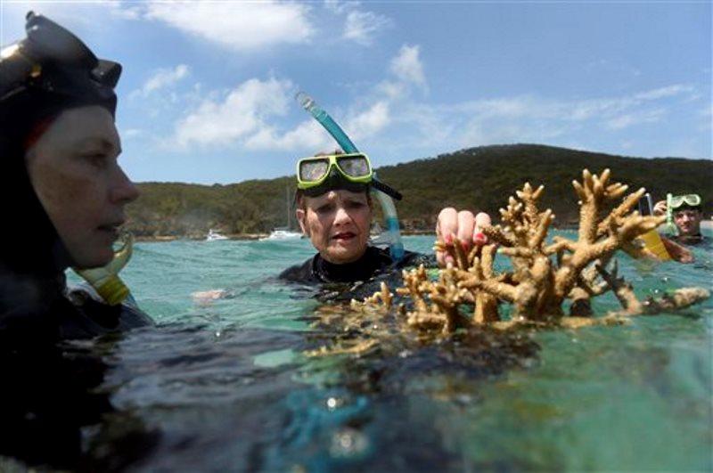 gran-barrera-de-coral-coral-muerto
