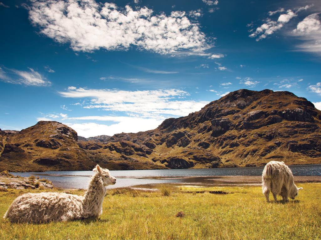 Unesco examinará 28 potenciales Reservas de la Biosfera, incluido Ecuador |  La República EC