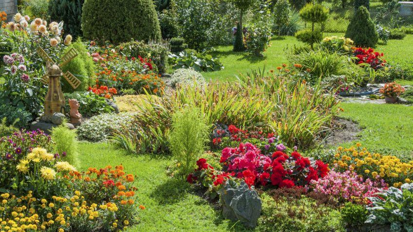 Las plantas reaccionan a la anestesia como los humanos y for Que plantas poner en una jardinera