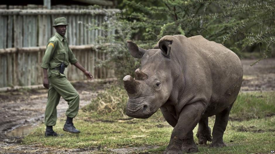 embriones híbridos rinocerontes