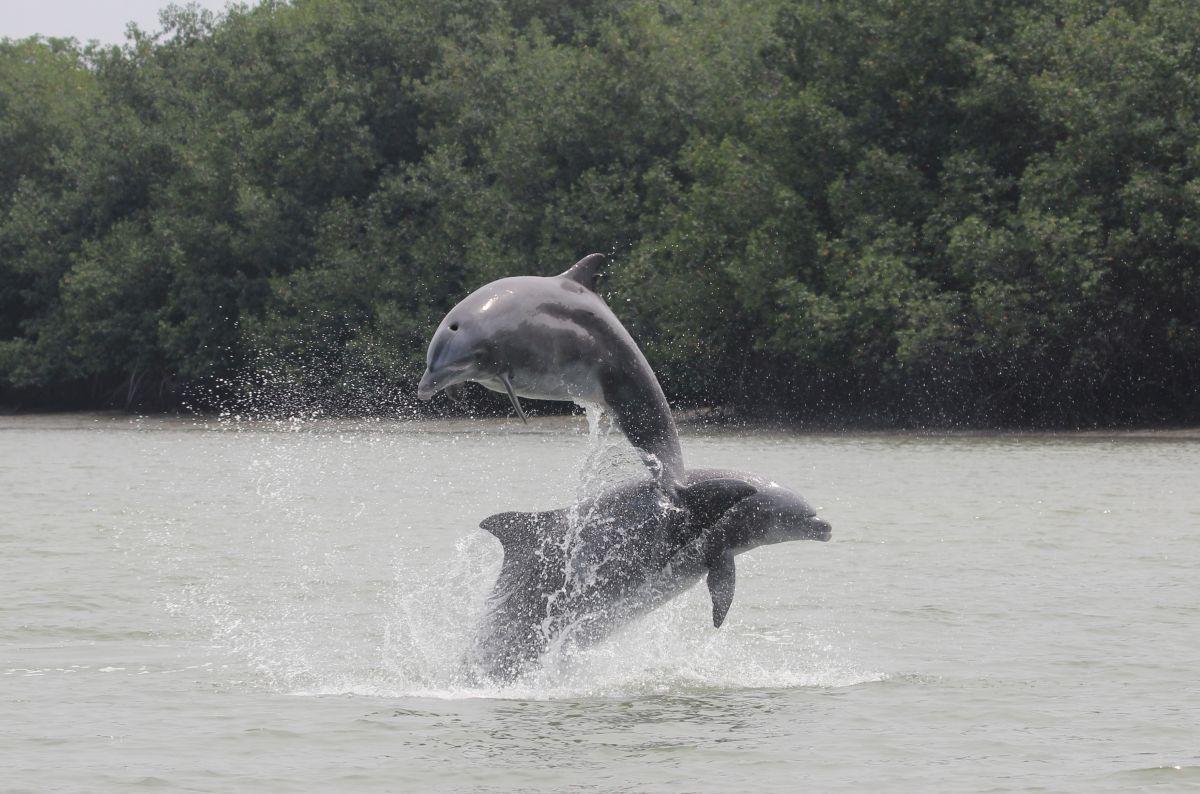 Delfín-saltando-5-F-Félix