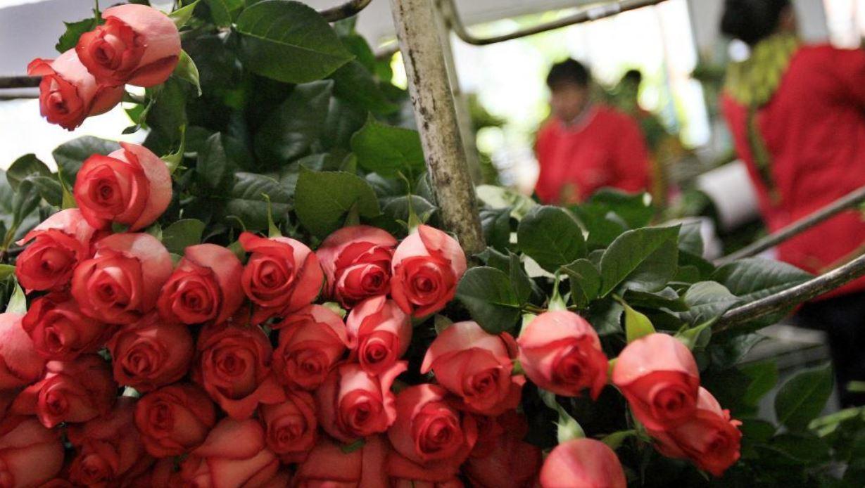 industria flores