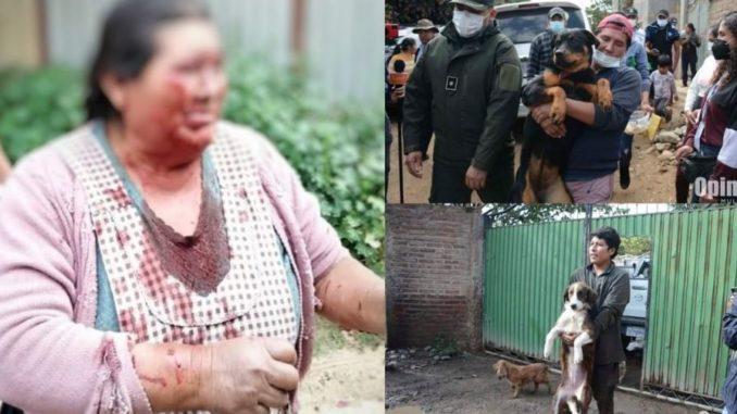 Una jauría de perros ataca a una mujer en Bolivia | La República EC